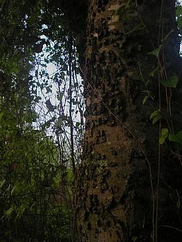 Tree Bark by Sara Croft