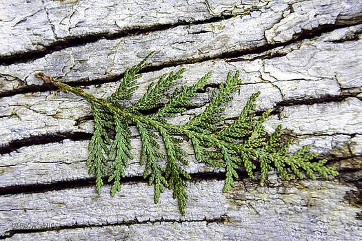 LeeAnn McLaneGoetz McLaneGoetzStudioLLCcom - Tree Bark with Cedar