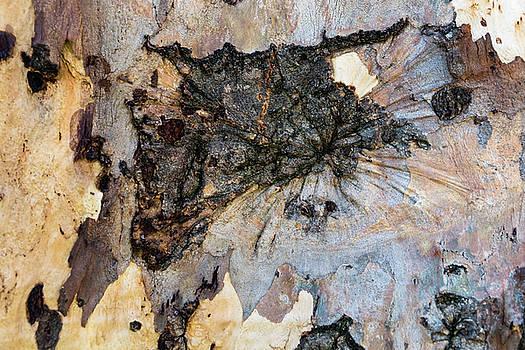 Robert VanDerWal - Tree Barks Pattern #13
