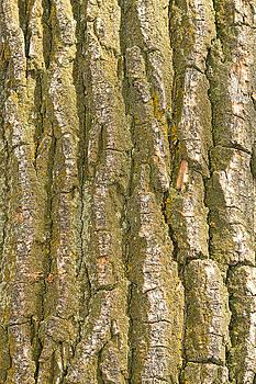 James BO Insogna - Tree Bark Texture Vertical
