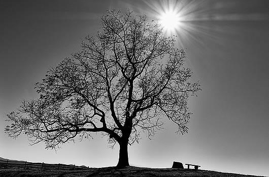 Tree Basking in the Sun by Georgette Grossman