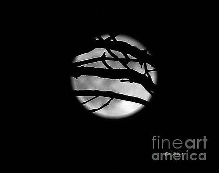 Tree branch cover over the Super Moon by Yumi Johnson