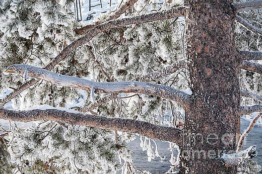 Bob Phillips - Tree Branch Dusting