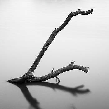 Mahesh Balasubramanian - Tree Branch on the Water