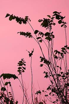 Ellie Teramoto - Tree Branches Under Pink Sky