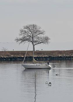 Tree breeze by Alan Thal