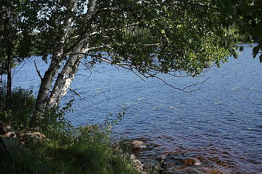 Tree by the Kawishiwi River by Francoise Villibord Pointeau