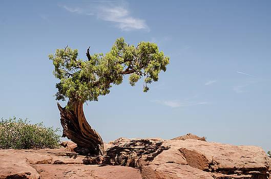 Tree by Carl Nielsen