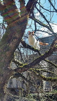 Tree Climber by Bill Thomson