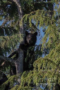 Rod Wiens - Tree Climbers