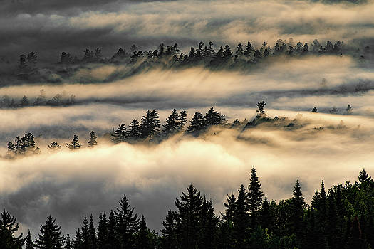 Trees in the Clouds by Brad Wenskoski