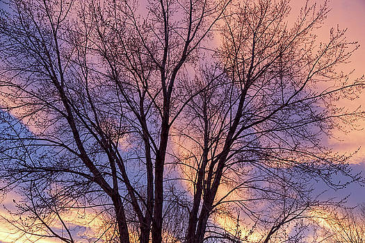 Tree Colors Of The Night by James BO Insogna