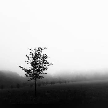 Tree by David Oakill