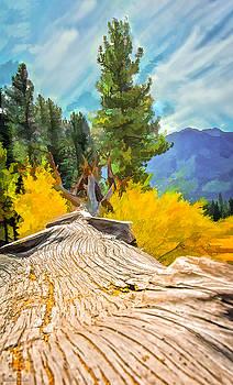 LeeAnn McLaneGoetz McLaneGoetzStudioLLCcom - Tree Down at Taylor Creek Lake Tahoe