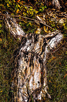 Tree down by Terepka Dariusz