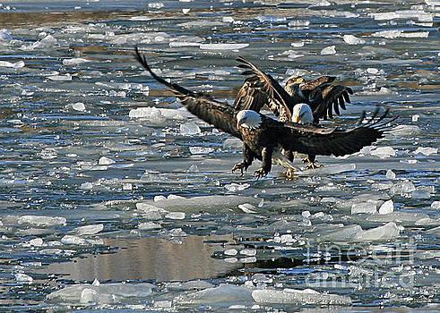 Tree Eagles on Ice by Paula Guttilla