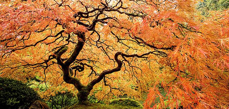 Tree Embrace by Lori Grimmett