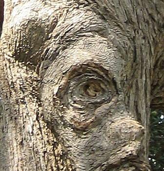 Tree Face by Stephen Hawks