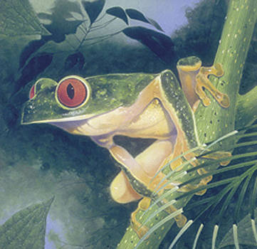 Tree Frog by Durwood Coffey