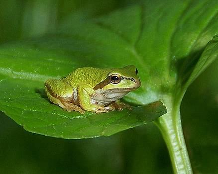 Bill Kellett - Tree Frog Number One