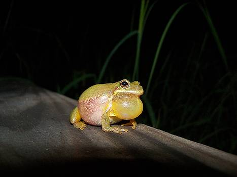Tree frog by Sarah Barber