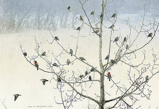 Tree Full Of Siskins With Finches by R christopher Vest