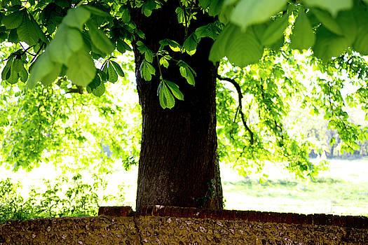 Tree by Gavin Bates