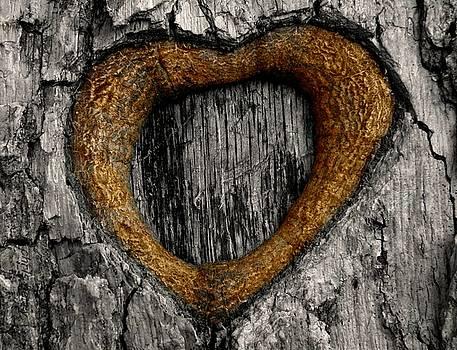 Tree Graffiti Heart by Chris Berry