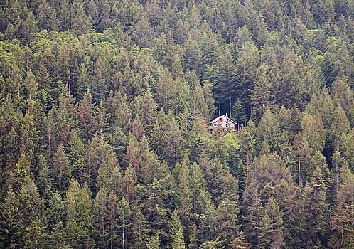 Tree House by Jennifer Ansier