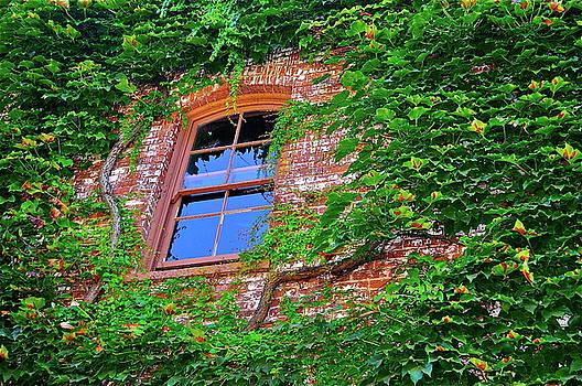 Tree House by Mark Lemon