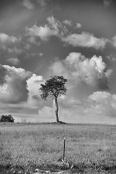 Tree In A Field by Guy Whiteley