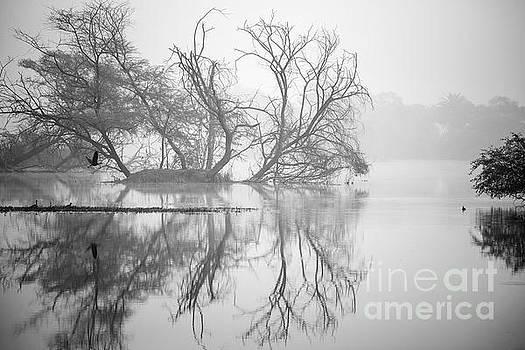 Pravine Chester - Tree in a lake