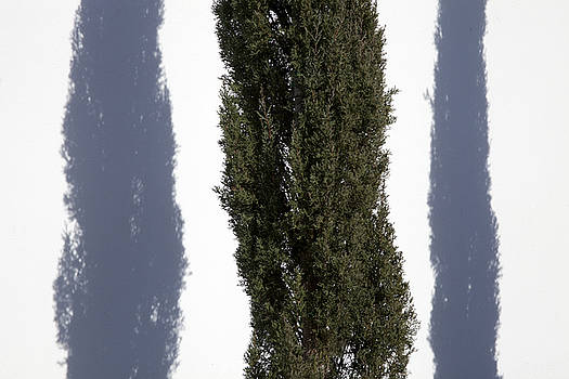 Tree In Between by Ross Odom