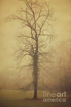 Tree in dusk by Mythja Photography