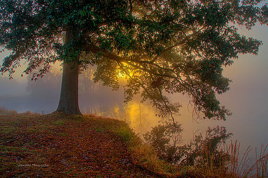 Tree in Fog by Wendell Thompson