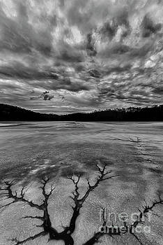 Tree in Ice Black and White by Thomas R Fletcher