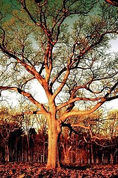 Tree in Park by Natalia Radziejewska