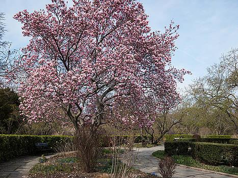 Tree in Pink by Cornelis Verwaal