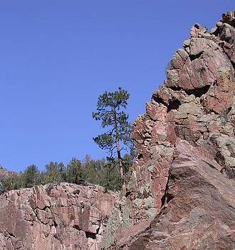 Tree in Rock Jemez NM by Susan Boyes