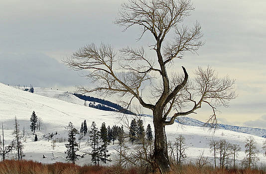 Tree in Snow by Ann Sullivan