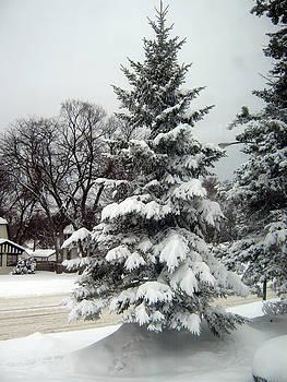 Tree in Snow by Emma Frost