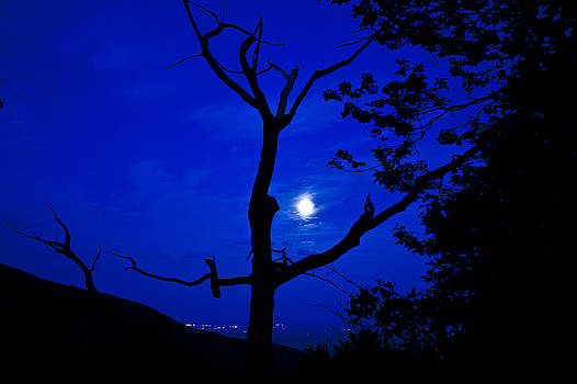 Tree in the Full Moon by Mark East