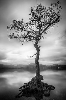 Tree in the Loch by Alex Saunders