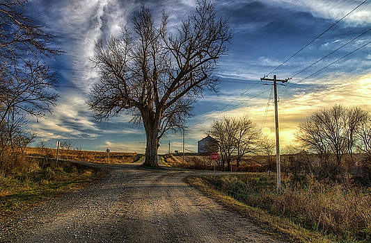 Tree in the Middle of the Road 2 by Christopher L Nelson