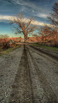 Tree in the Middle of the Road 6 by Christopher L Nelson