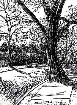 Tree In The Park by Daniel Ribeiro