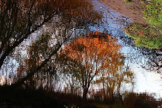 Tree In The Sun by Nik Watt