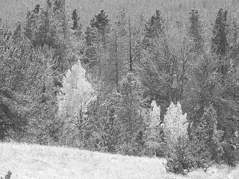 Colette Merrill - Black and White Trees in WY