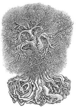Tree by Joe MacGown