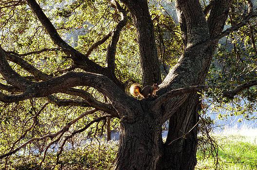 Donna Blackhall - Tree King